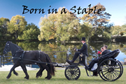 Carriage Services for Weddings and other Special Events